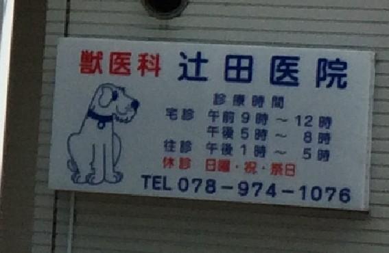 辻田獣医科医院の診療時間
