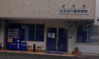 須磨区のわたなべ動物病院