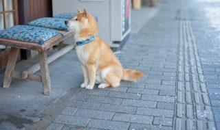 犬生理症状
