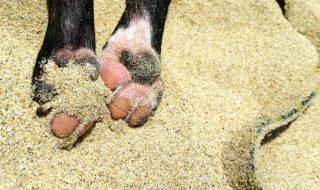 犬の肉球が腫れる原因