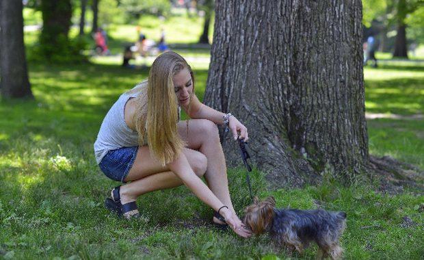 犬 ワクチン 散歩