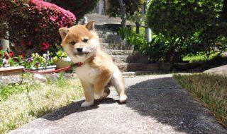 犬 膀胱炎 症状 仕草