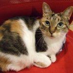 猫 血尿 原因 メス