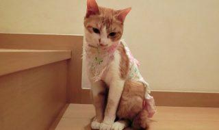 猫クラミジア 症状
