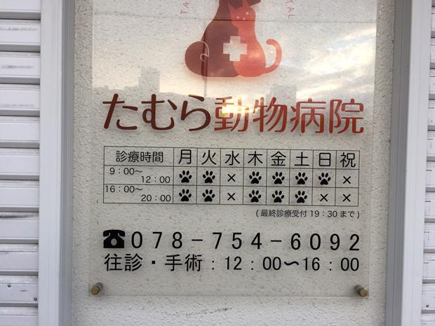 須磨区たむら動物病院の診療時間