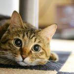 猫 エイズ 原因