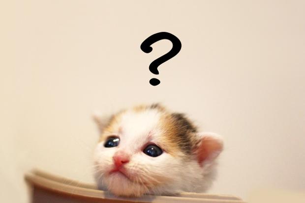 猫風邪について悩む猫