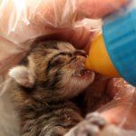 猫風邪 治し方 子猫