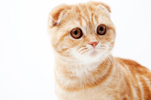猫エイズ 人間にうつる