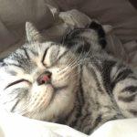 猫風邪 治療代