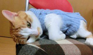 猫 血尿 ストレス