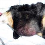 犬 脂肪腫 原因