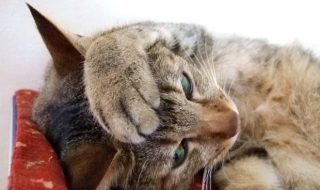 猫に生理はない