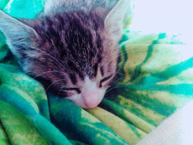 猫風邪 目 癒着