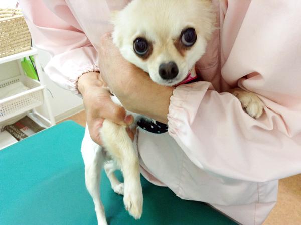 犬 生理痛ある