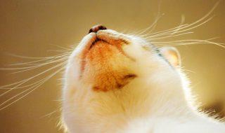 猫 顎ニキビ 原因