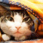 猫風邪 原因