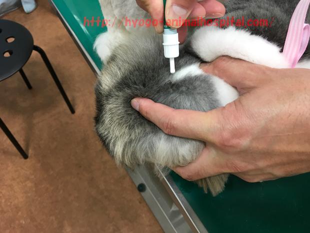 犬の毛をかきわける獣医師