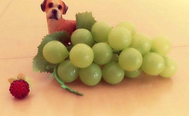 犬 ブドウ 食べれる