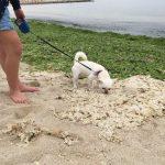 犬が散歩で歩かない原因