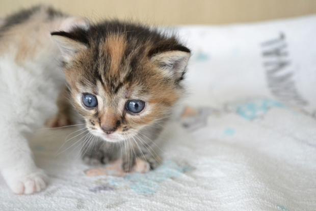 子猫がくしゃみを連発