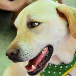 盲導犬訓練士 仕事内容