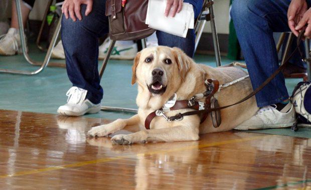 盲導犬訓練士 給料