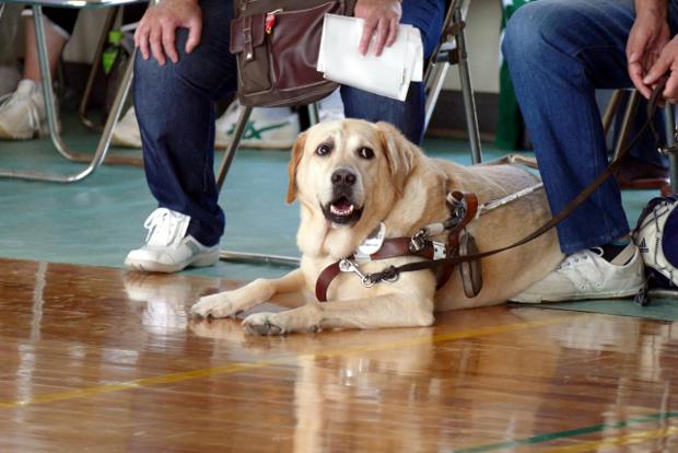 聴導犬の頭数