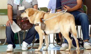 盲導犬訓練士の給料