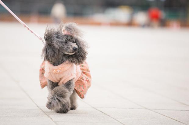 犬 散歩 時間帯