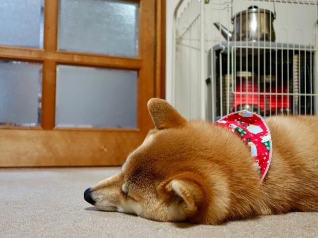 犬 咳き込む 倒れる