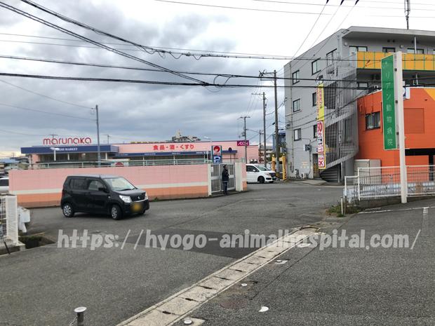神戸市リアン動物病院