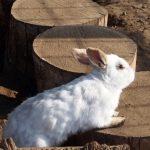 ウサギ ジャンプ 意味