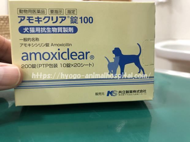 ケンネルコフ 抗生剤