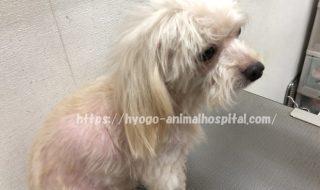 犬 クッシング症候群 治療費