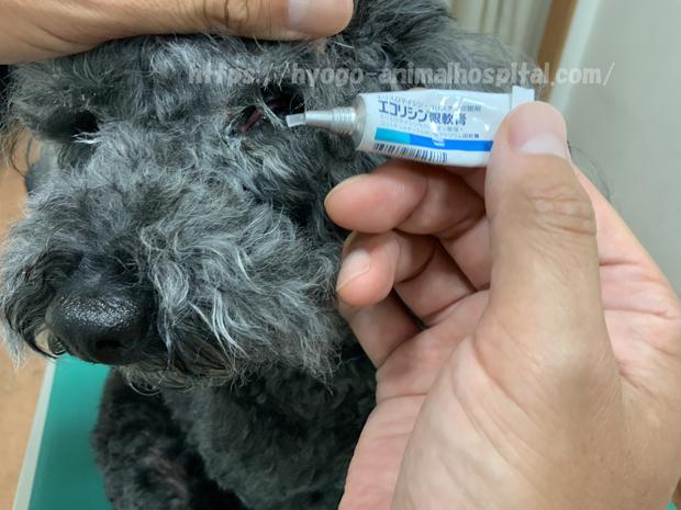 犬のエコリシン眼軟膏