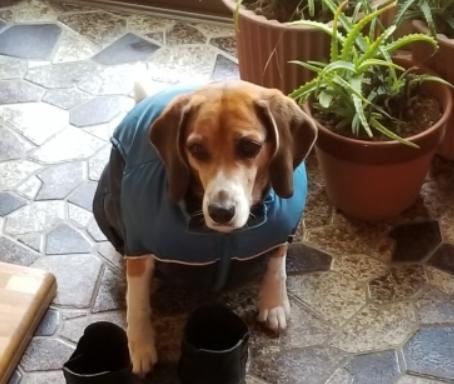 犬 分離不安 原因