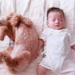 犬 赤ちゃん 同居