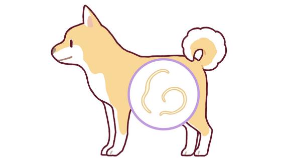 犬回虫 人間 症状