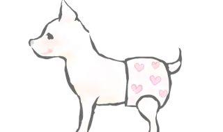 犬 偽妊娠 対処
