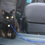 猫 長距離移動 車
