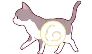 猫 トキソプラズマ 感染率