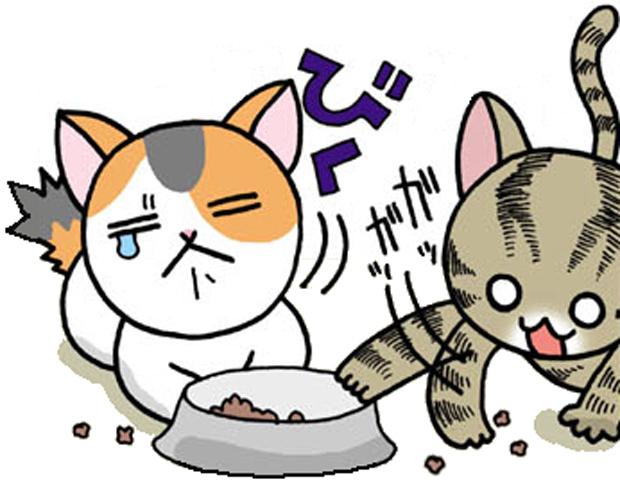猫のエサの取り合い