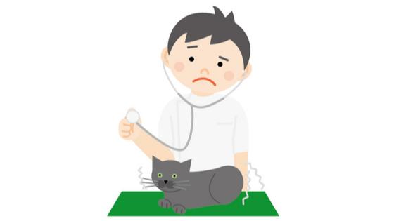 猫 白血球 少ない 原因