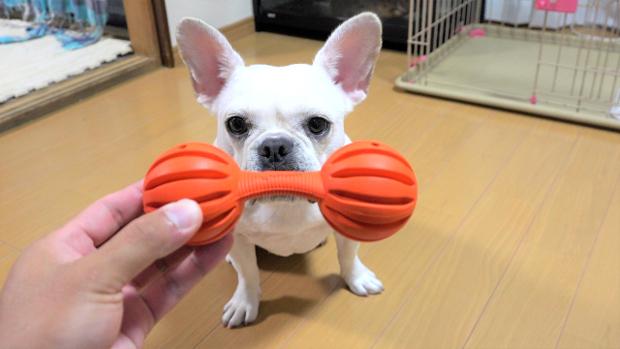 犬 おもちゃ 選び方