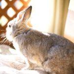 ウサギ 床に敷く物