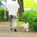 犬 飼いやすい 高齢者