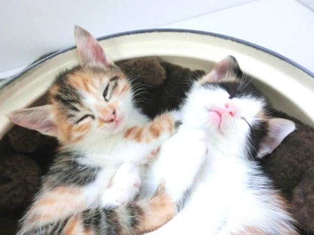 猫 仲良くさせる方法