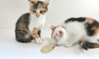猫 二匹 仲良し