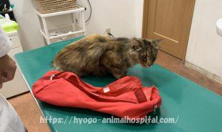 猫 副腎皮質機能亢進症